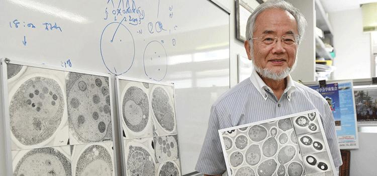 Nobel Prize winning research 2016